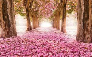 blossom tunnel